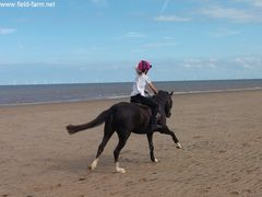 Photo - beach riding